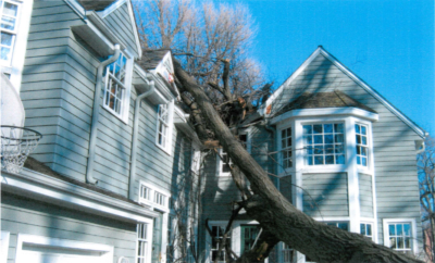 In 2006 an oak tree decided to not stand any more and crashed through the roof of the home, literally shaking it to its foundations. Photo courtesy of the Village of Whitefish Bay.