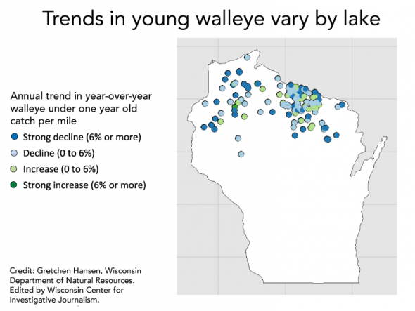 Trends in young walleye vary by lake