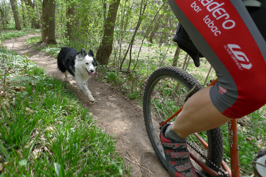 I typically only ever took one dog at a time on the local mtb trails. I kept a leash in my jersey pocket to get them their or in case we ran into other people. (Photo by Dave Schlawbowske)