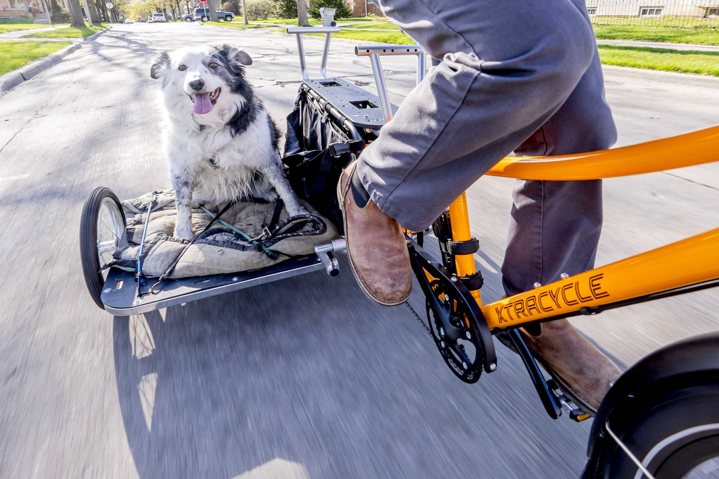 Apparently the sidecar only has room for one dog at a time. (Photo by Dave Schlawbowske)