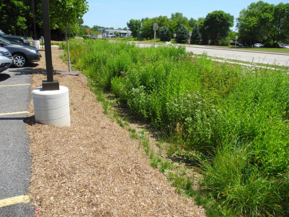 Sloping down to rain garden at Outpost Natural Foods. Photo by Laura Thompson.