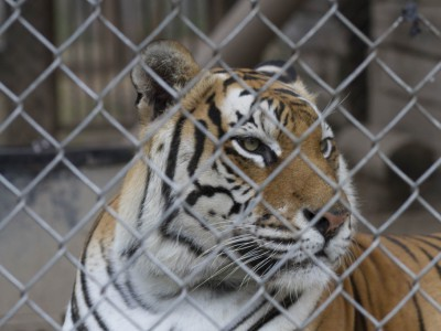 Why Wisconsin's a Magnet for Wild Animals
