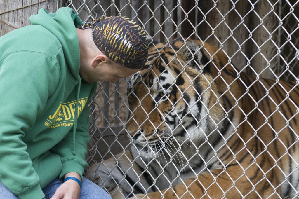 "Andy Carlson, who has volunteered at Valley of the Kings for about 20 years, leans in to speak to a tiger living at the sanctuary in Sharon. Carlson said many of the animals at Valley of the Kings have been caught up in the ""underground market"" of exotic animal trade. Some critics say Wisconsin's lax exotic animal laws make the state a draw for smugglers. Photo by Grey Satterfield IV of Curb Magazine."