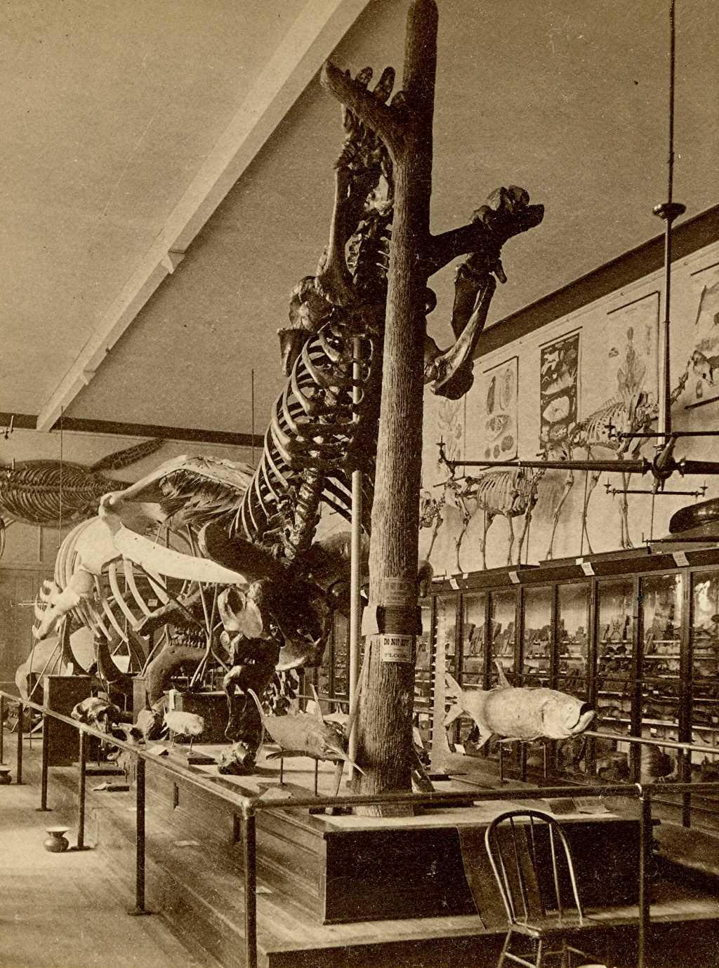 Public Museum Exhibit, 1880s. Image courtesy of Jeff Beutner.