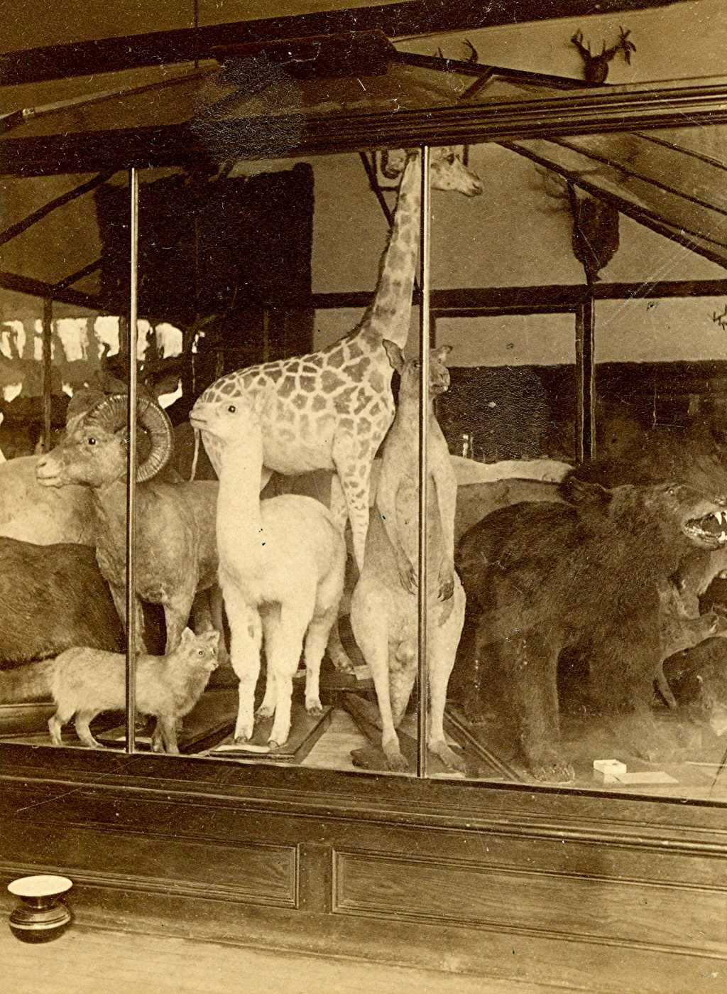 Public Museum Exhibit, 1880s. Image courtesy of Jeff Beutner