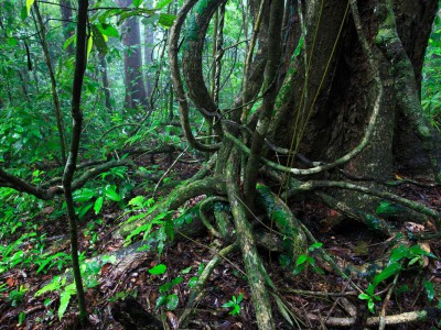 Marquette scientists find vines in tropical forest may significantly accelerate climate change