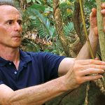 Marquette biological sciences professor receives $900,000 National Science Foundation grant for tropical forest research