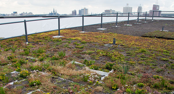 Green Roof atop the Global Water Center. Photo from Hanging Gardens website.