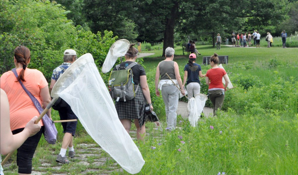 Attendees at the 2015 Bee Fest at the University of Wisconsin-Madison Arboretum set out to catch and identify bees. Wisconsin has among the highest annual loss rate of managed honeybees in the country. Photo by Marion Ceraso for the Wisconsin Center for Investigative Journalism.