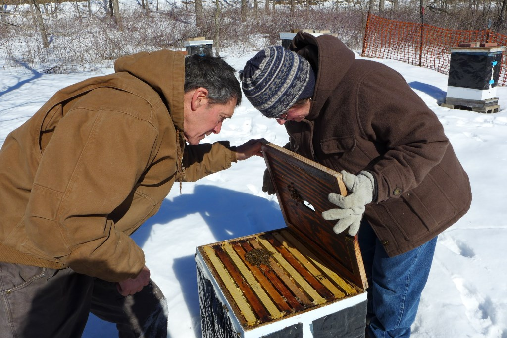 Farmer and beekeeper Harriet Behar and her husband Aaron Brin check on the bees at Behar's Crawford County farm. Behar has 25 beehives on her 216-acre farm in southwestern Wisconsin. Photo by Bridgit Bowden of Wisconsin Public Radio.