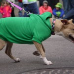 Guide: Dog Care Services In Milwaukee County