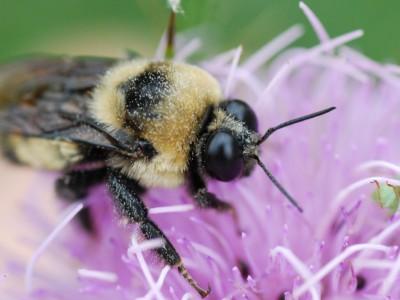 Wisconsin Has New Pesticide Problem