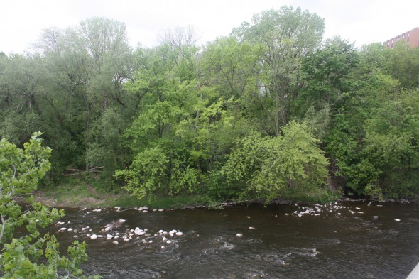 Trees on the bank of the Milwaukee River where the Village of Humboldt was located. Photo by Carl Baehr.