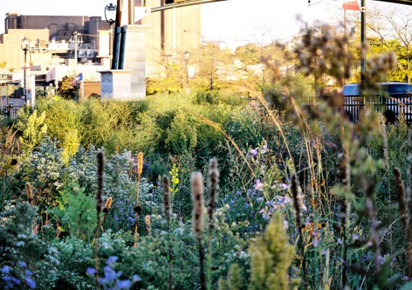 Rain Garden at MillerCoors. Photo courtesy of MMSD.