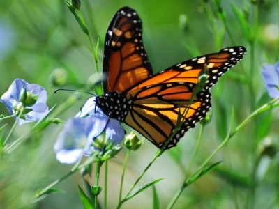 Green Luminaries: Butterfly Supporters Help Environment