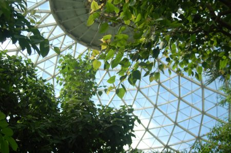 Repairs on the Tropical Dome were completed on Sept. 23. Photo by Edgar Mendez.