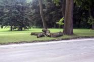 Did the lumberjack strike again? Photo by Carl Baehr.