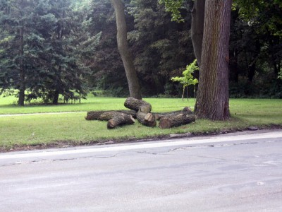 """City Streets: Wahl Ave. Named After """"Grandfather"""" of Parks"""