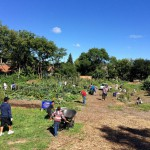 Green Luminaries: Victory Garden Initiative Values Rainwater