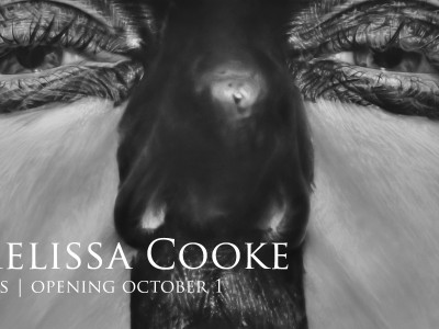 Melissa Cooke's Large-Scale Photorealist Graphite Drawings on View  at the Museum of Wisconsin Art