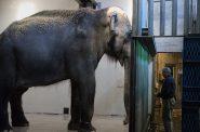 Elephant House. Photo by Dick Blau.