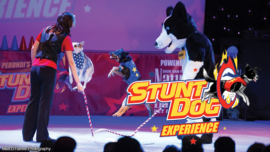 chris-perondis-stunt-dog-experience-show-detail