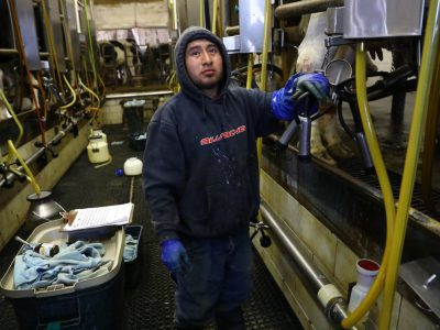 State Dairy Farms Losing Immigrant Workers