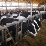 Campaign Cash: DNR Decision Pleases Big Dairy