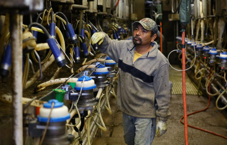 Jorge, who recently arrived from Mexico, works in the milking parlor of Nora Gilles' dairy farm in northern Buffalo County, Wis. Photo by Coburn Dukehart of the Wisconsin Center for Investigative Journalism.