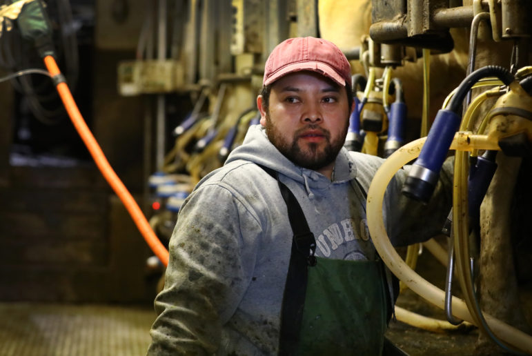 Jorge Hernandez works in the milking parlor of a dairy farm in northern Buffalo County, Wis. Photo by Coburn Dukehart of the Wisconsin Center for Investigative Journalism.