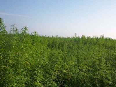Campaign Cash: Ag Interests Want Legalized Hemp