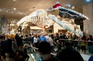 The Christmas Whale in the Milwaukee Public Museum lobby.
