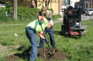 A crew from Simon Landscape Company plants trees at 4623 W. Lisbon Ave. Photo by Jeramey Jannene.