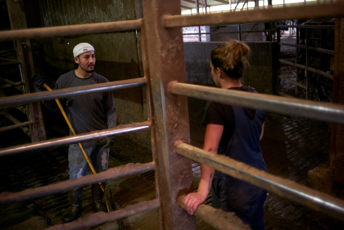 Manuel Estrada, a farmworker from Mexico, speaks with his boss, Abby Driscoll, at her family's dairy farm outside Manitowoc, Wis. Estrada is in the United States illegally and faces heightened anxiety around detainment and deportation under President Donald Trump. Photo by Darren Hauck for Reveal.