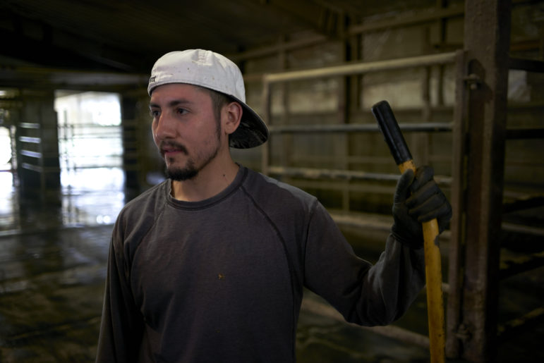Because the dairy farm where he works is facing a labor shortage, Manuel Estrada said he hasn't had a real day off in about a month. Photo by Darren Hauck for Reveal.