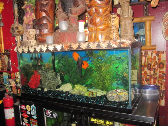Fish Tank. Photo by Michael Horne.
