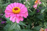 """Mums add color to """"Flower Power,"""" the fall floral show at The Domes, Sept. 23–Nov. 5"""