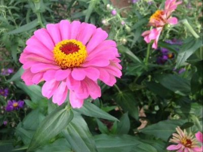 """Fall Floral Show """"Flower Power"""" Brings Back the '60s"""