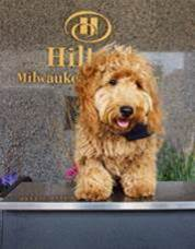 Hilton Milwaukee City Center's Beloved Canine Concierge, Millie, Turns 1!