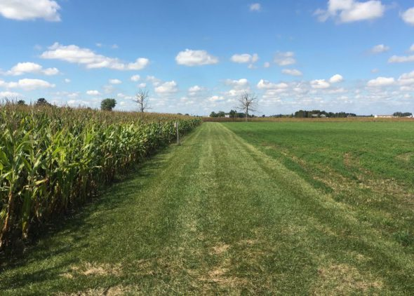 Another conservation practice: planting strips of grass around crops to filter nutrients from runoff. The kicker: it takes up valuable ground for planting. Photo by Steven Maier.