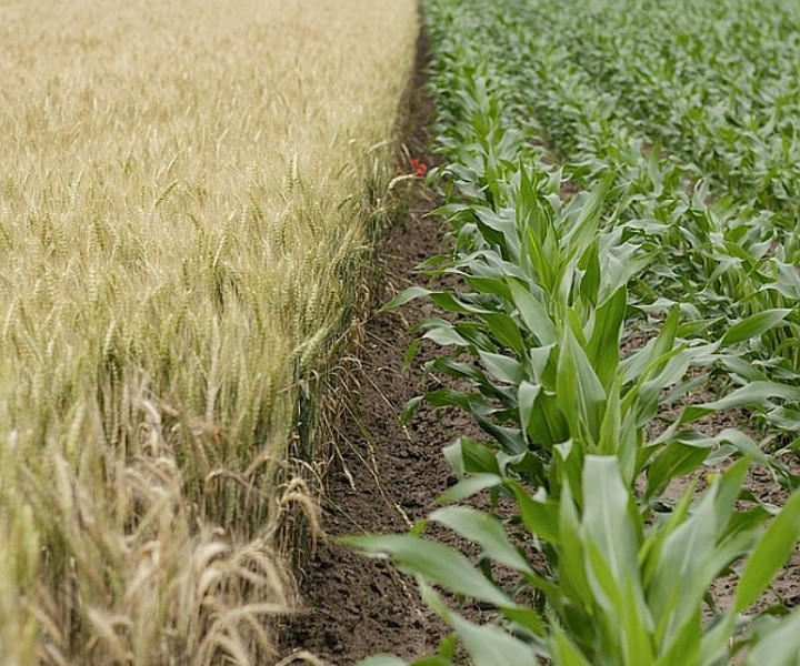 Crops. Photo from WDC.