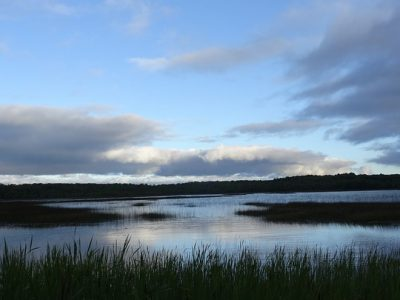 Campaign Cash: Assembly Approves Rollback of Wetlands Protection