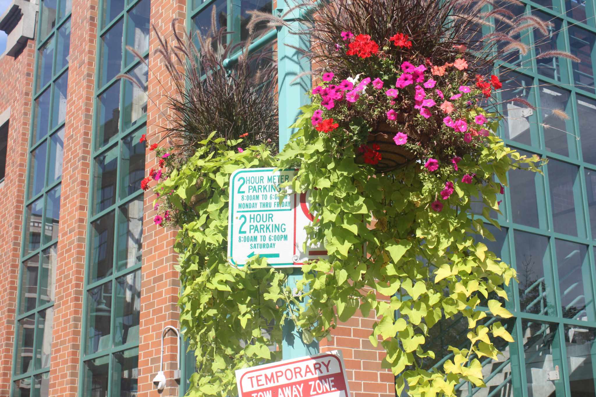 Hanging flower baskets. Photo courtesy of Cathedral Square Friends, Inc.