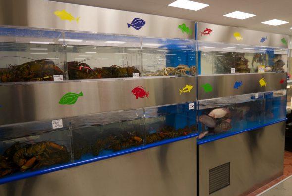 Large tanks of fresh fish and shellfish. Photo by Graham Kilmer.