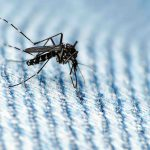 Swarms of Mosquitoes Plague State
