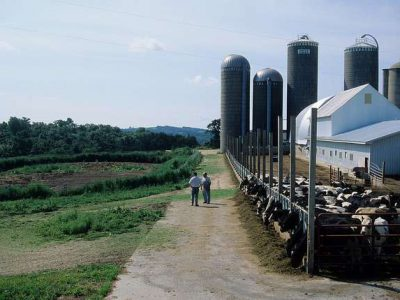 Data Wonk: Why State's Dairy Farms Face a Crisis