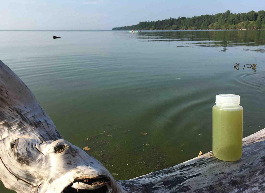 Scientists investigated algal blooms that grew along the south shore of Lake Superior in August 2018. Photo by Brenda Moraska of the Lafrancois/National Park Service.