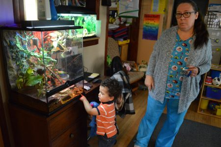 Joseph Carey loves watching the lizards when he stays at Mama Bear's Family Child Care, owned by Barbara Kelley. Photo by Analise Pruni/NNS.