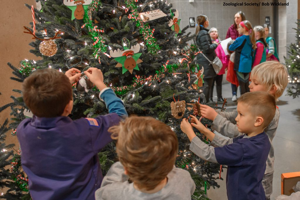 Boy Scout tree decorating. Photo by Bob Wickland/About the Zoological Society of Milwaukee.