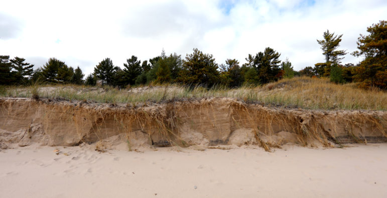 Sand dunes are held together by a variety of grasses along the Lake Michigan shoreline in Wisconsin's Kohler-Andrae State Park. Kohler Co. plans to build a golf course nearby. Photo by Coburn Dukehart/Wisconsin Center for Investigative Journalism.
